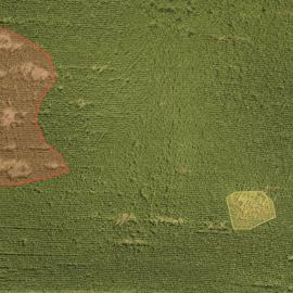 Porast kukurice poškodený lesnou zverou