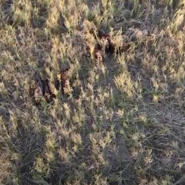 Zver vo vysokej tráve